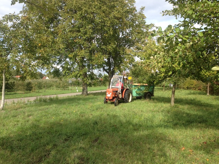 Streuobsternte mit Traktor